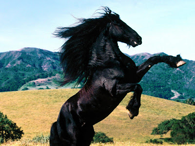 Jumping Black Horse Wallpapers