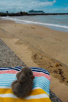 sunbakiing Wombat