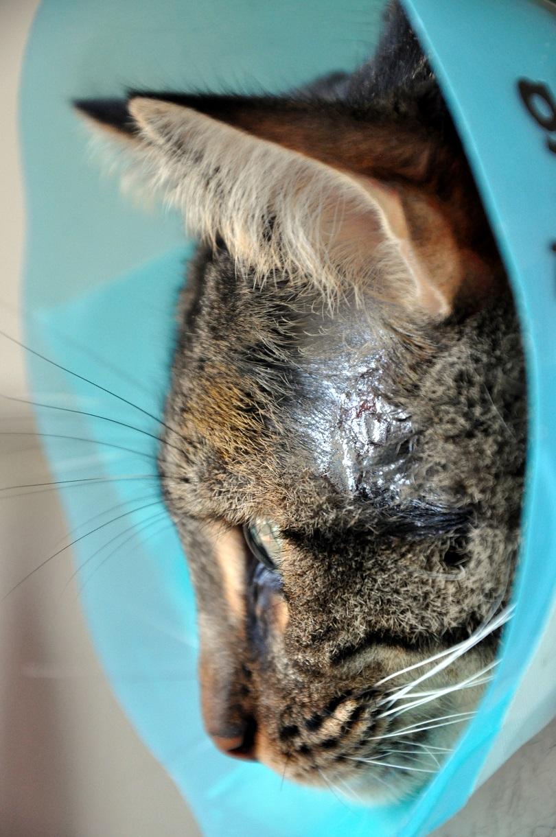 Les chats du bocage floflo le balafr - Enlever odeur pisse de chat ...