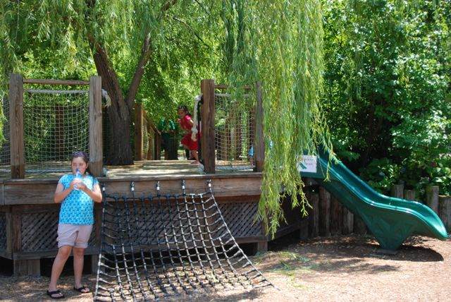 The slide platform was build right around an existing willow tree.
