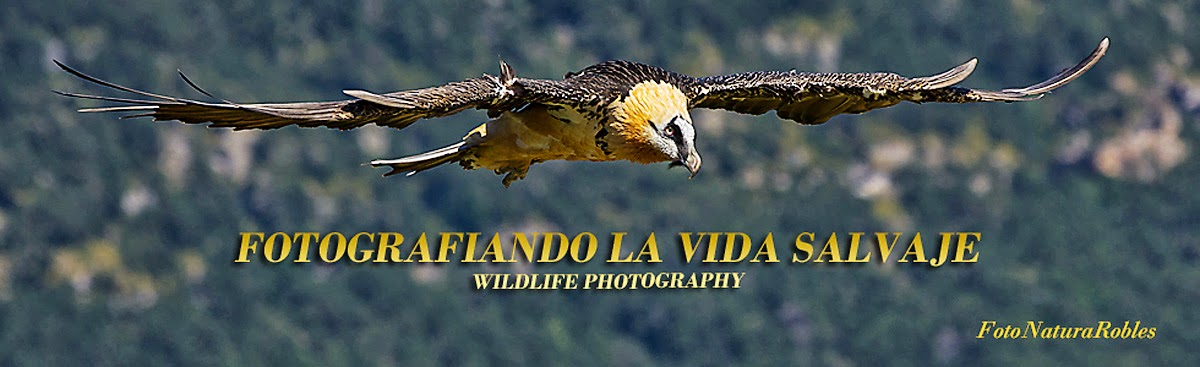 Fotografiando  la Vida Salvaje - Wildlife Photography