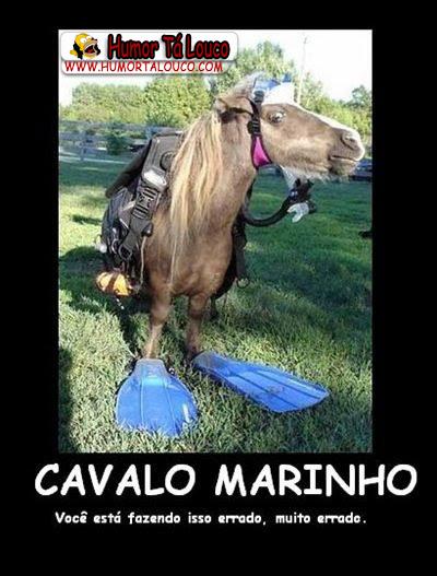 Motivacional - Cavalo Marinho