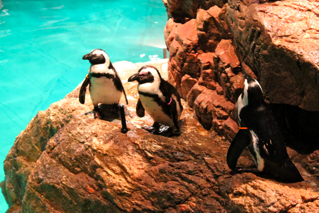 penguins New England aquarium