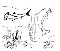 disegni di animali marini da colorare