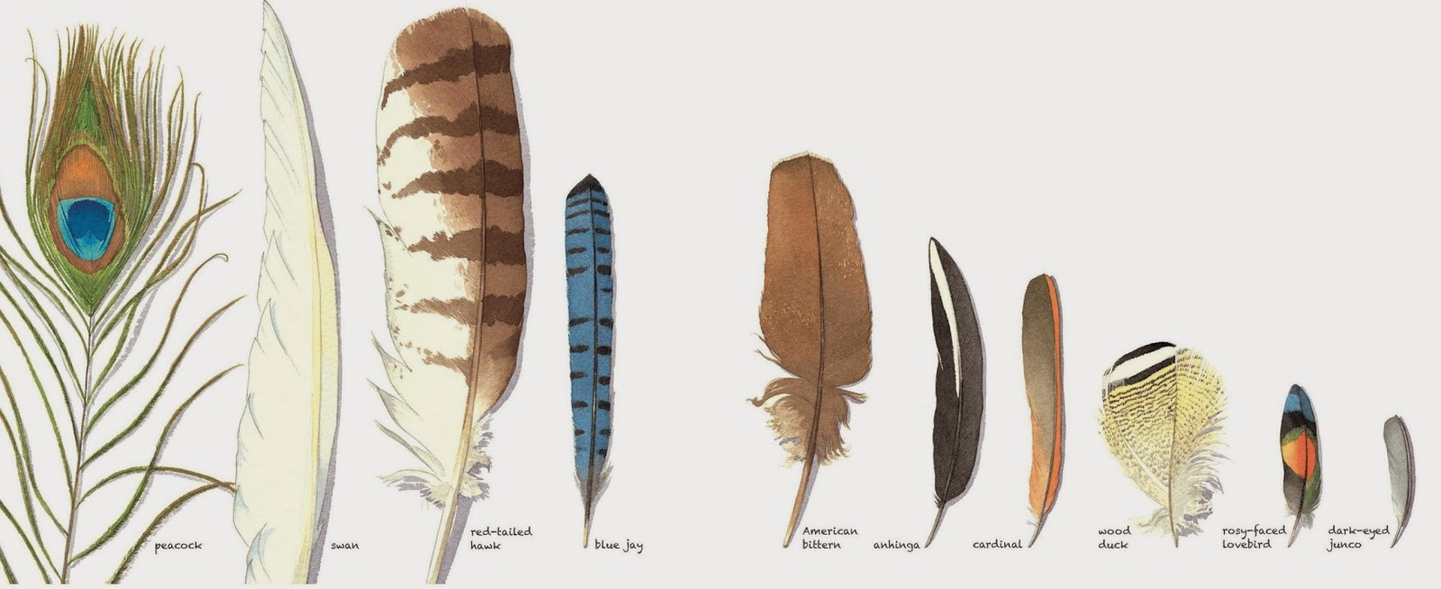 The Nonfiction Detectives Feathers Not Just For Flying