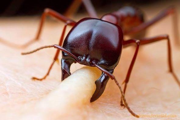 اذا قرصتك نملة فاشكرها لهذه الاسباب