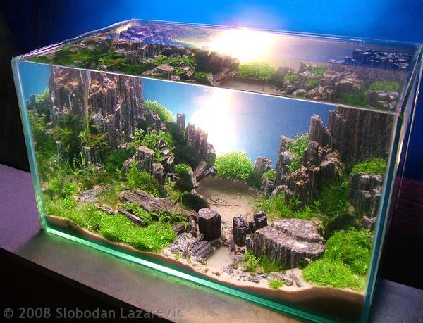 Aquarium Chiller Temperature for Aquascape