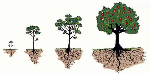 Stages of tree life cycle