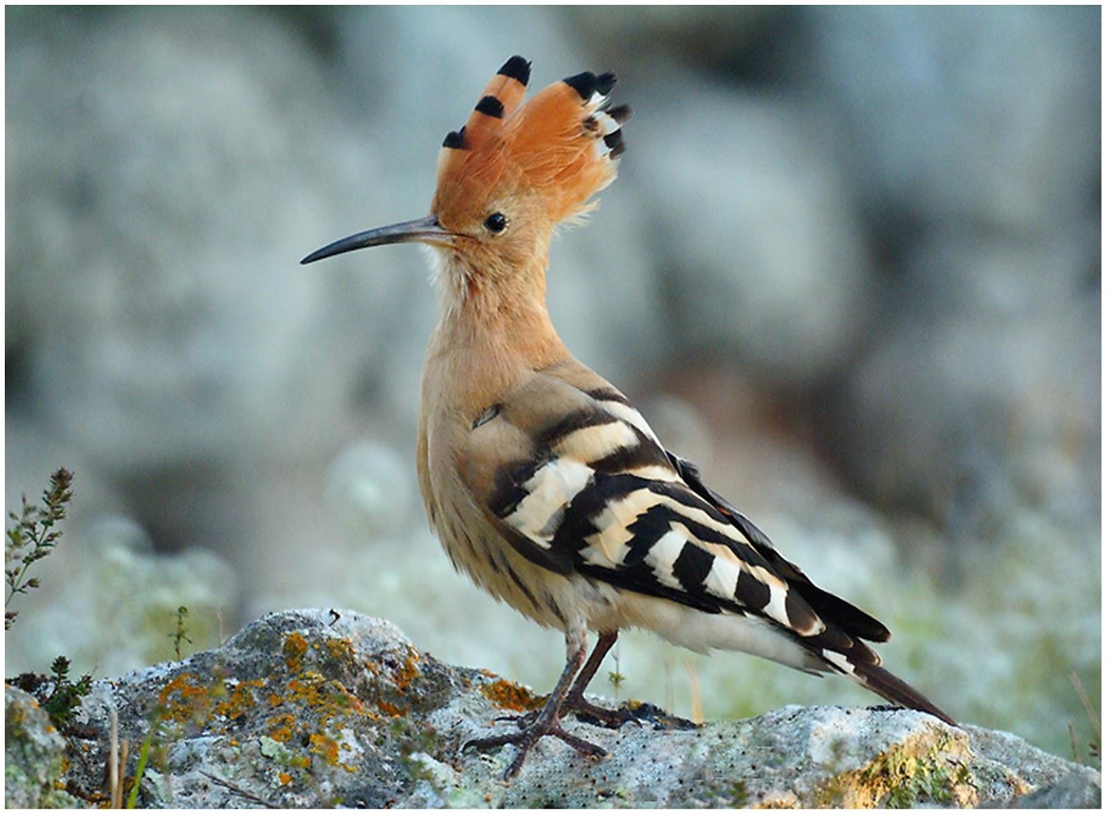 mitoloji etimoloji kuşlar