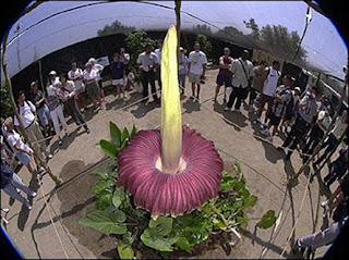 Biggest-flower-photos-pictures-images-pics