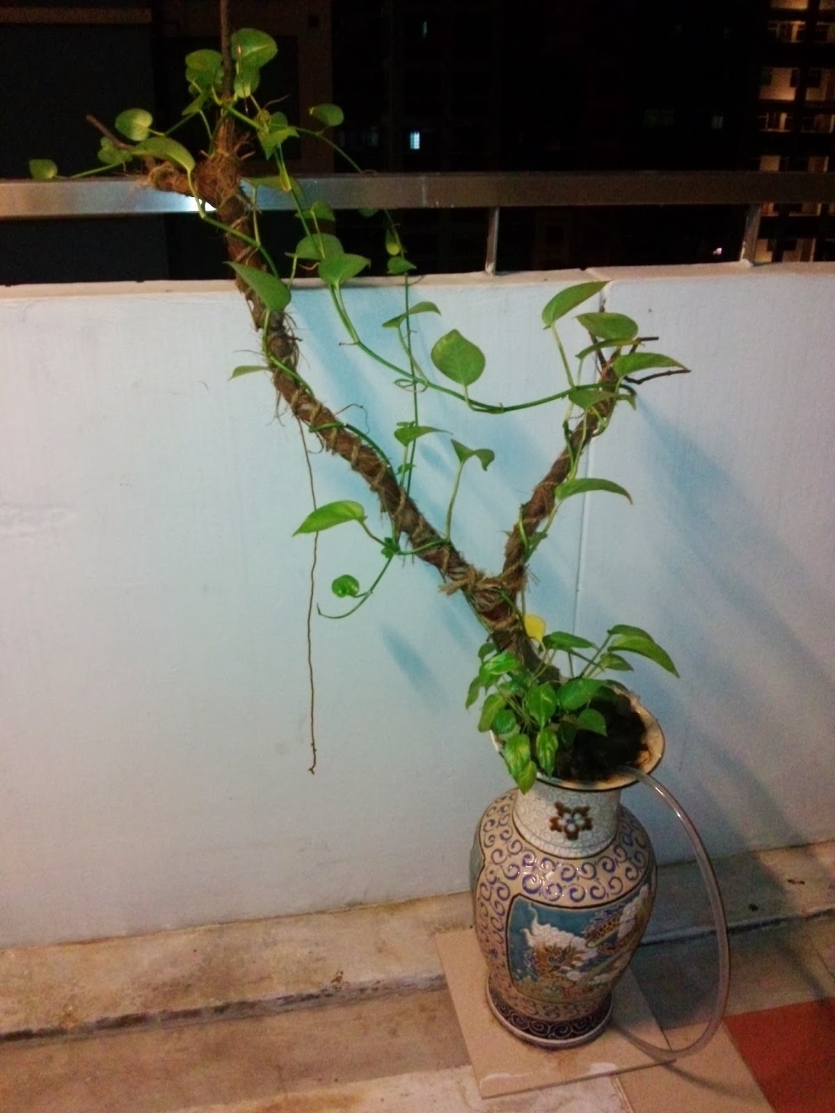 Me no geek indoor plants in water only stagnant hydroponic - Indoor water plants list ...