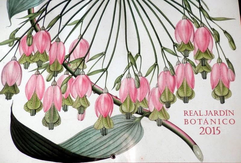Mutis en el calendario 2015 del real jard n bot nico de madrid for Calendario jardin botanico 2016