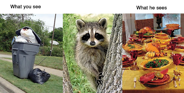 What you see vs what they see, funny, funny pictures, animals, funny animals