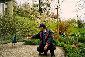 在花岛上,孔雀随便散步,没有墙和铁网拦住它。