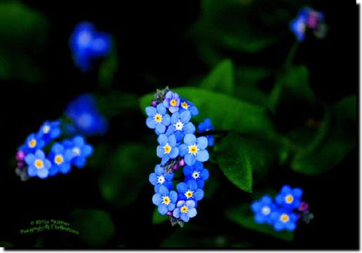 Blue Flowers Names