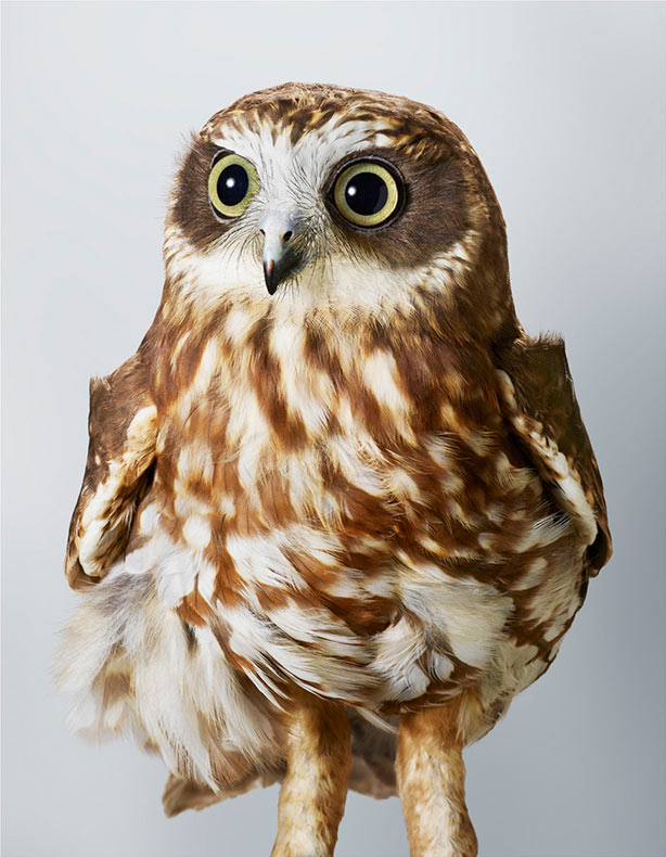 Retratos de aves impregnados con personalidad por Leila Jeffreys