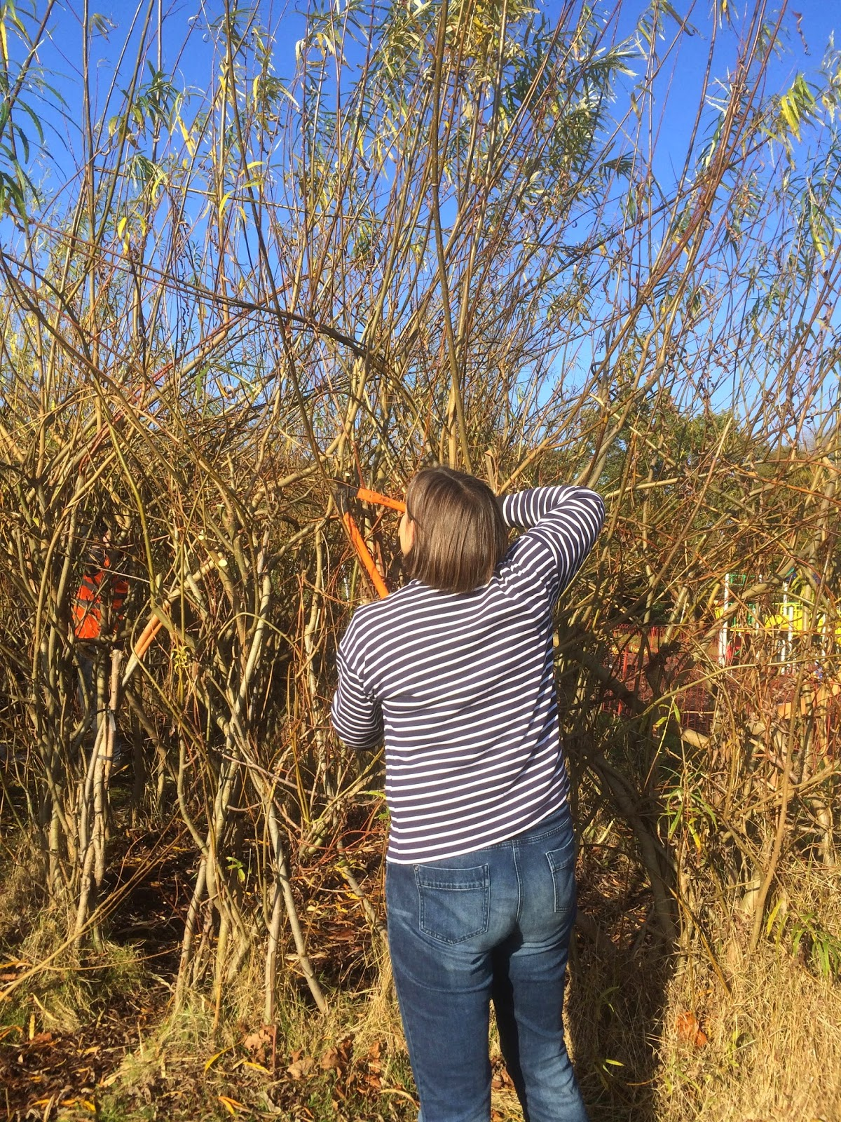 Chopping for the willow stockpile in readiness for wreath making