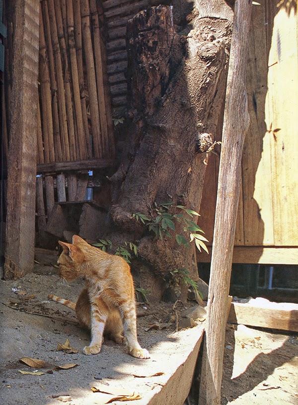 cat travel pictures