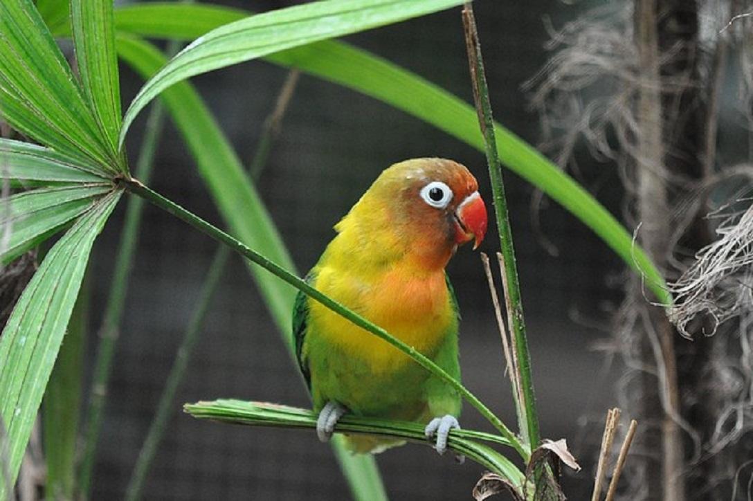 Ayuda Sobre Pájaros