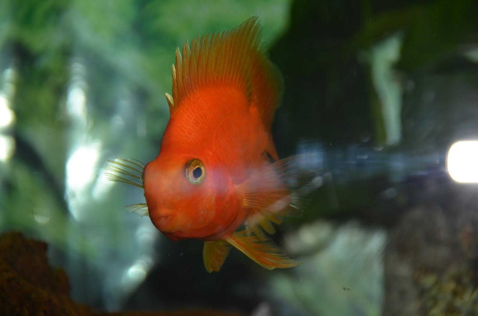 Animalerie cartierville poissons for Animalerie poisson