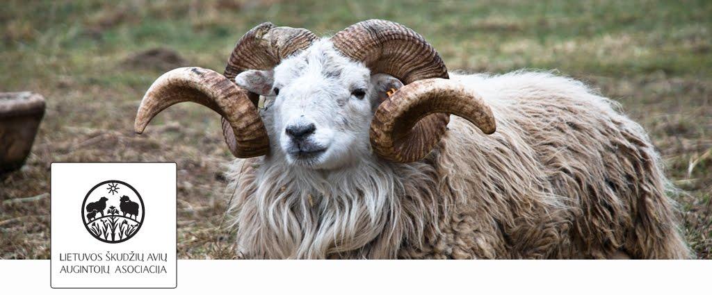 Lietuvos škudžių avių augintojų asociacija