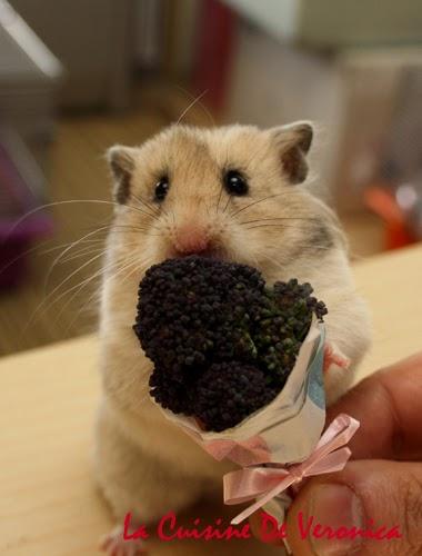 La Cuisine De Veronica,V女廚房,倉鼠,Hamster,情人節,Valentine's Day