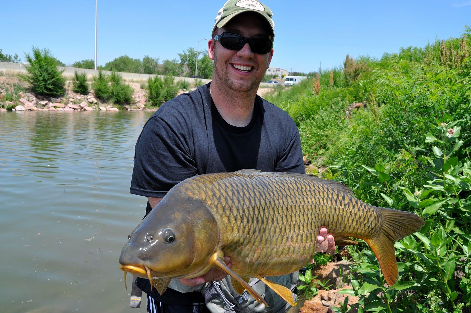 Colorado springs urban flyfishing investment banking for Colorado springs fishing