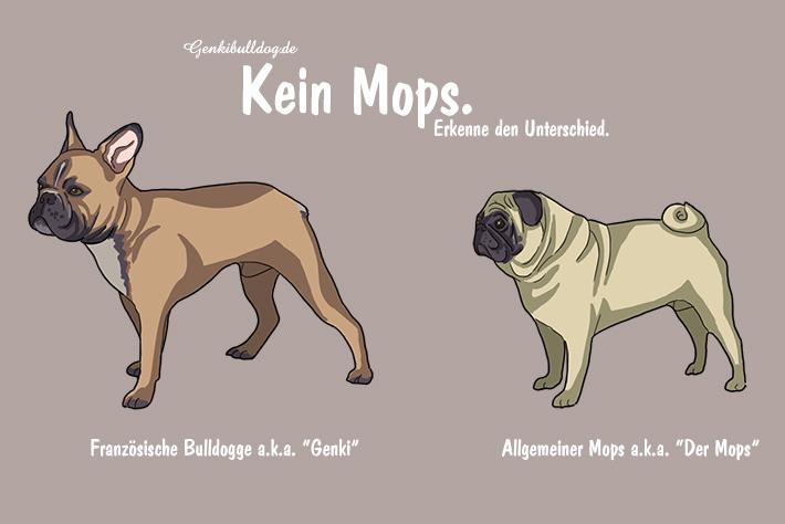 Unterschied zwischen Mops und Französische Bulldogge