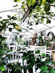 Växthuset