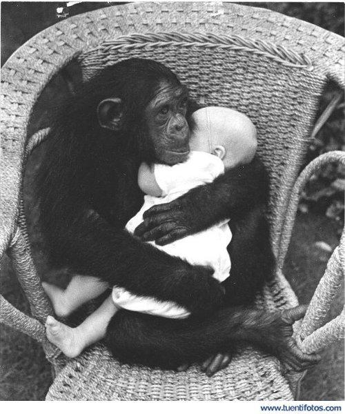 animales AMOR+ANIMAL+%25281%2529