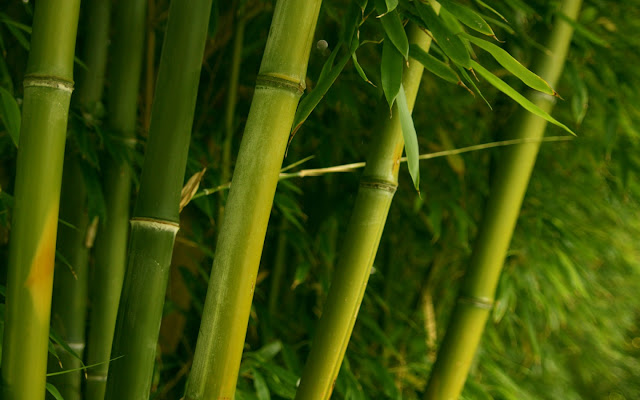 Bamboo Nature2