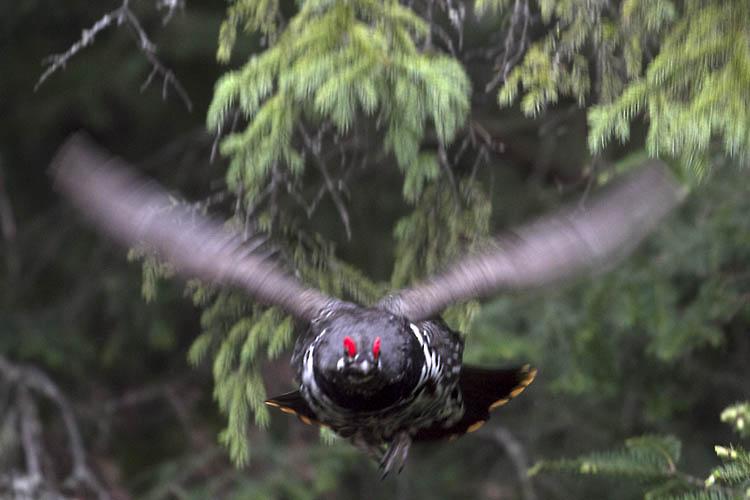 Simpson Taxidermy Studio  Bird mounts