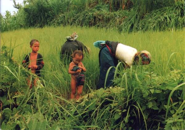 two children with mothers working in a rice field