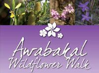 Awabakal wildflower walk