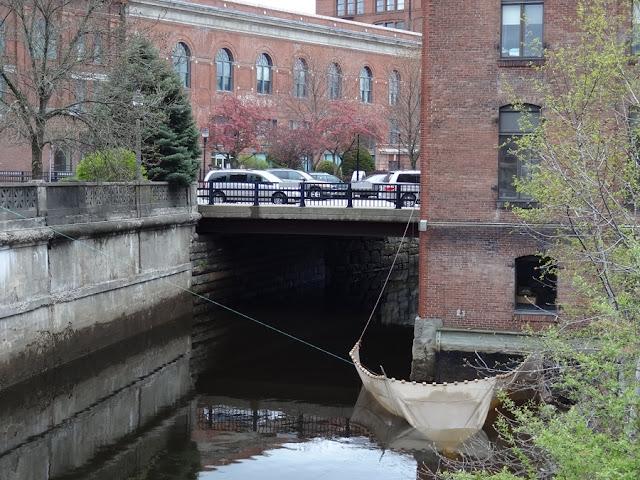 American_Eel,net,downtown,Bangor,Maine,Kenduskeag,canal,eel,elver,fishing