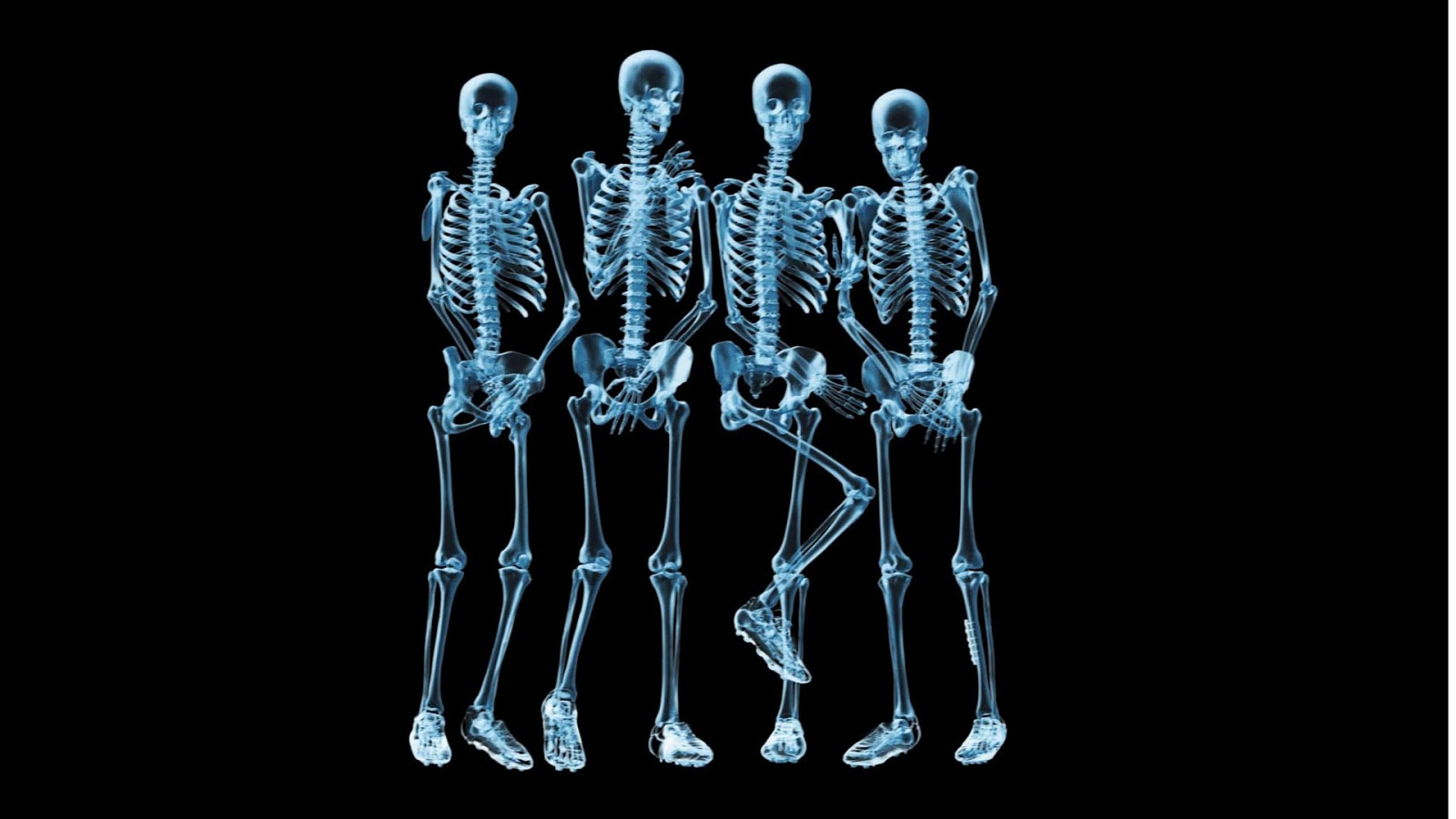 Human Skeleton Funny Wallpaper Free HD