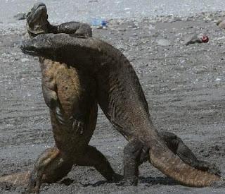 Komodo Hewan Purba Di Indonesia Yang Masih Hidup Sampai Sekarang