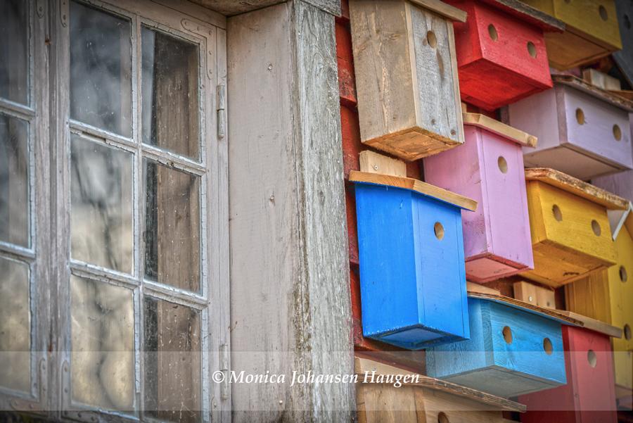 fuglene i farger
