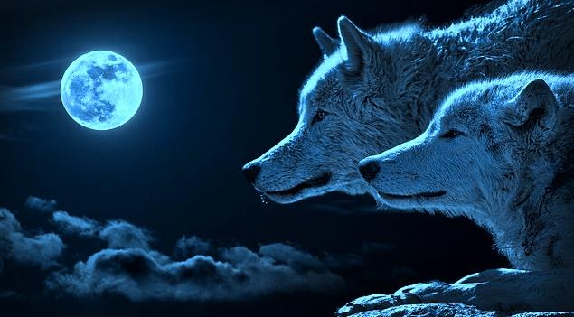 blue moon wolf wallpaper - photo #10