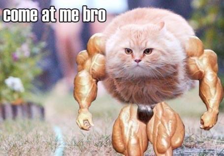 Sociolatte: Come at me Bro Meme