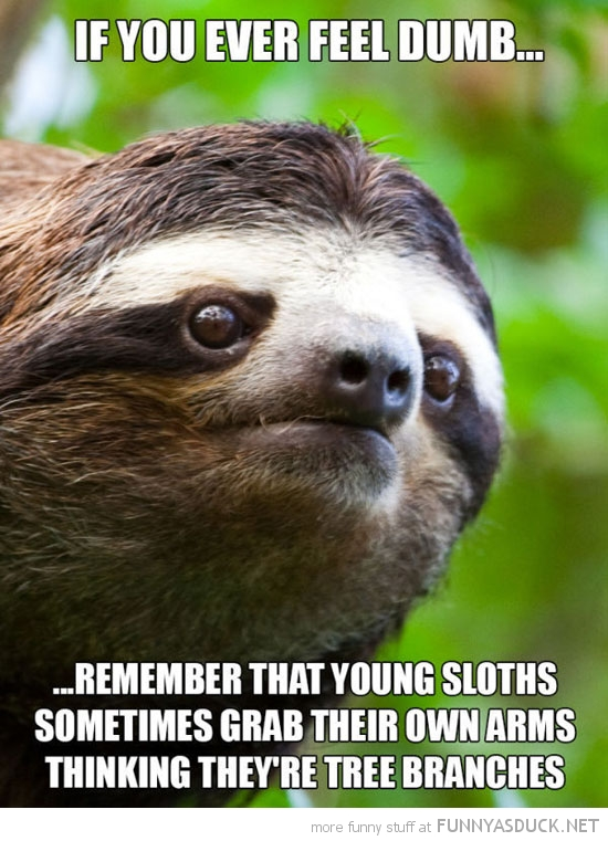 Dirty sloth pictures - photo#19