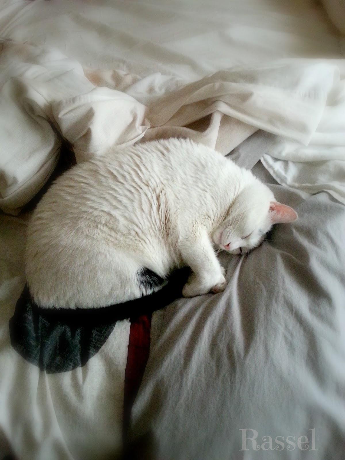 blog de gata Rassel y sus libros de gatos