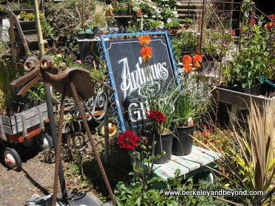Antiquarian and Florabunda Fine Flowers in Duncans Mills, California