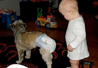 funny baby picture,  diapers on a dog