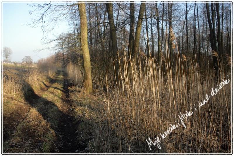 wiosna w polu i lesie