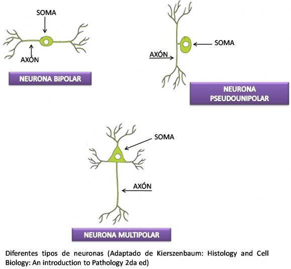 Biologa y Geologa 1 Bachillerato IES El Palo 2 EL SISTEMA