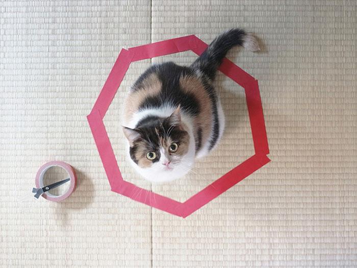 Cư dân mạng ngỡ ngàng với Cách Bẫy Mèo đơn giản chưa từng thấy