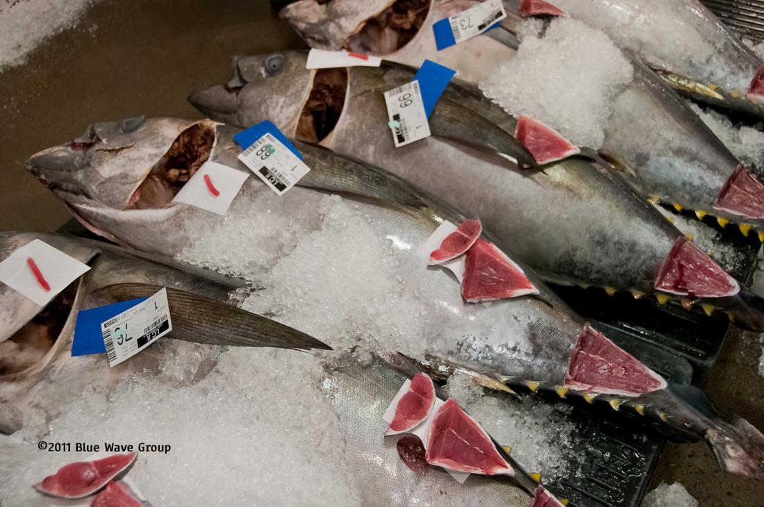 Blue wave pix february 2012 for Sashimi grade fish near me