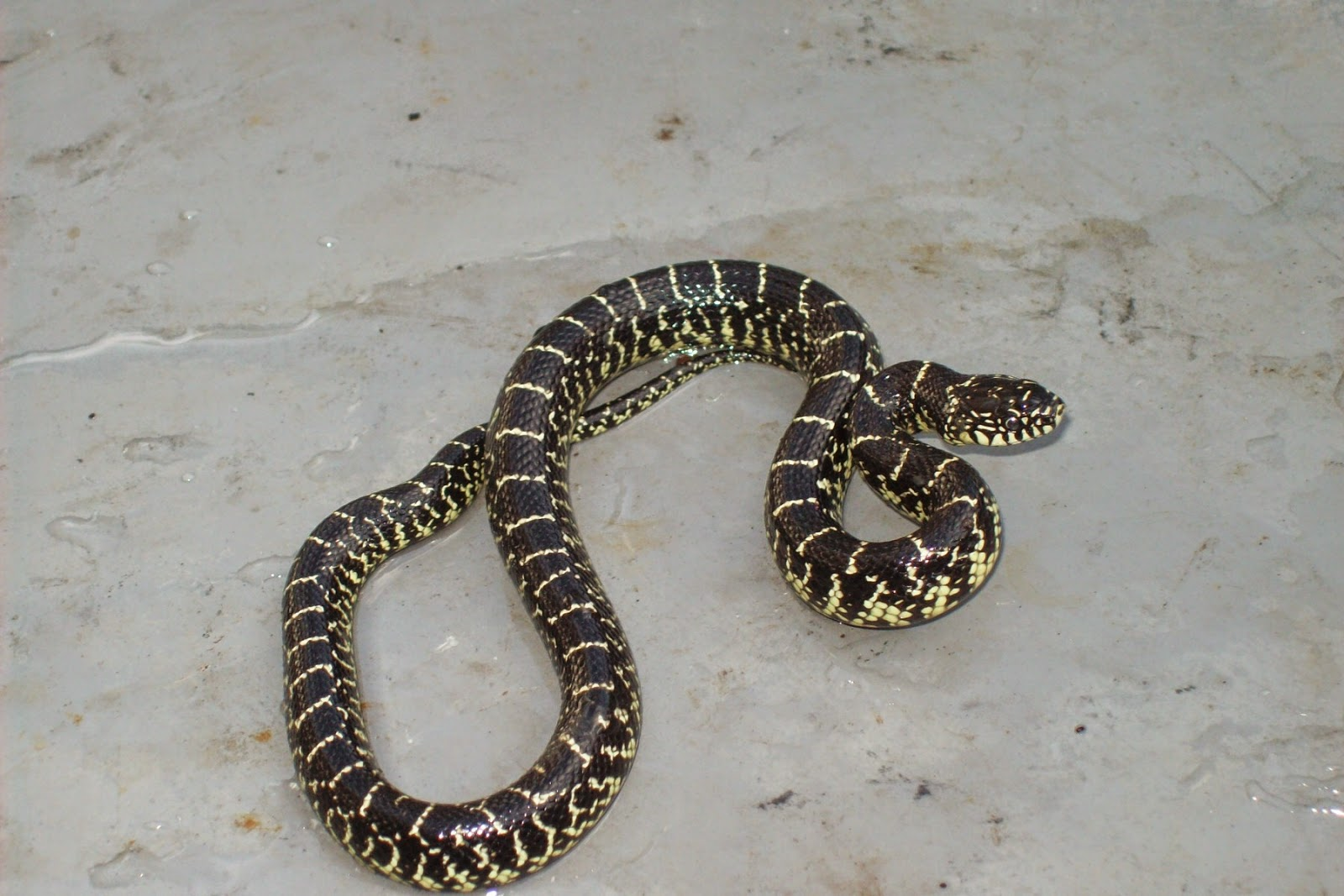living alongside wildlife readers write in a mixed bag of snake
