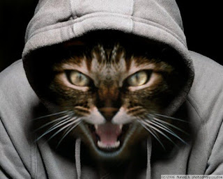 funny cat picture cat rapper normal cat
